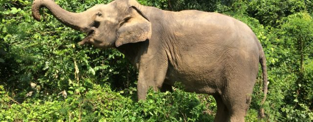 Elephant Haven promoting the right kind of animal tourism