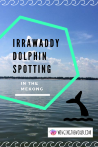 Irrawaddy Dolphins in the Mekong river.