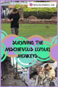 Surviving the Lopburi monkeys