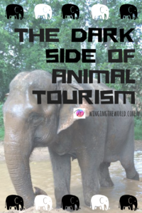 Thailand's animal tourism industry.