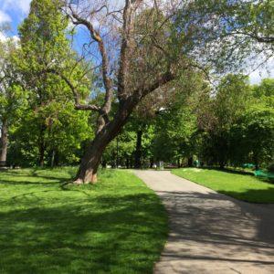 One of Geneva's scenic parks