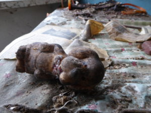 An old toy dog lays abandoned in the Chernobyl Exclusion Zone.