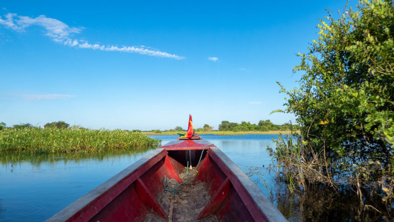 Your Ultimate Guide to Visiting the Amazon Rainforest on a Pampas Tour, Bolivia