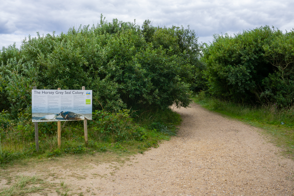Walking trail to the Horsey seals viewing area.