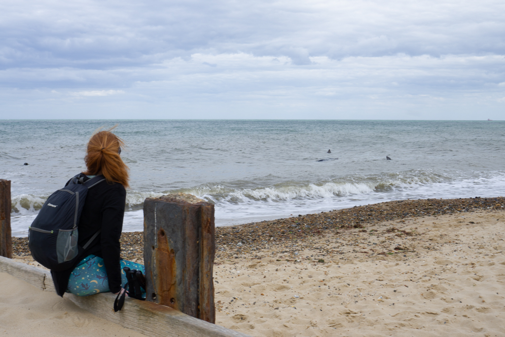 Girl watches seals in sea from beach